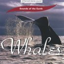 Sounds of the Earth - David Sun: Whales (CD)